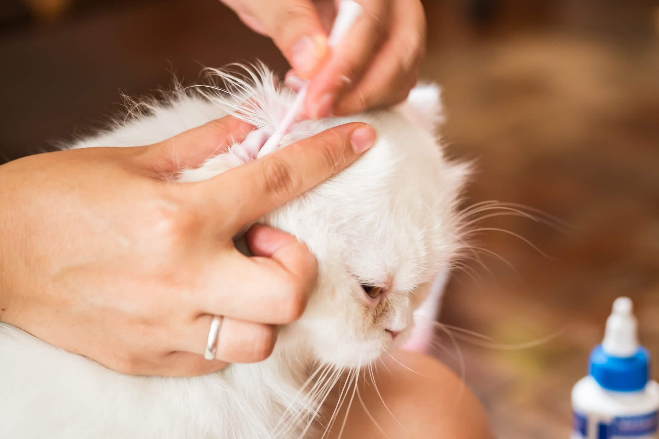 Home Remedies – Dog Ear Mites Can Be Treated Naturally